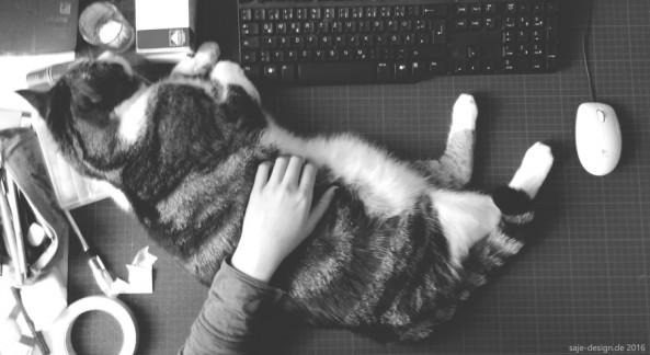 Home office mit Katze